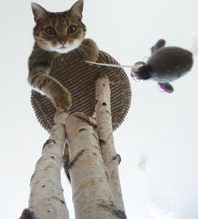 Katzen wollen spielen